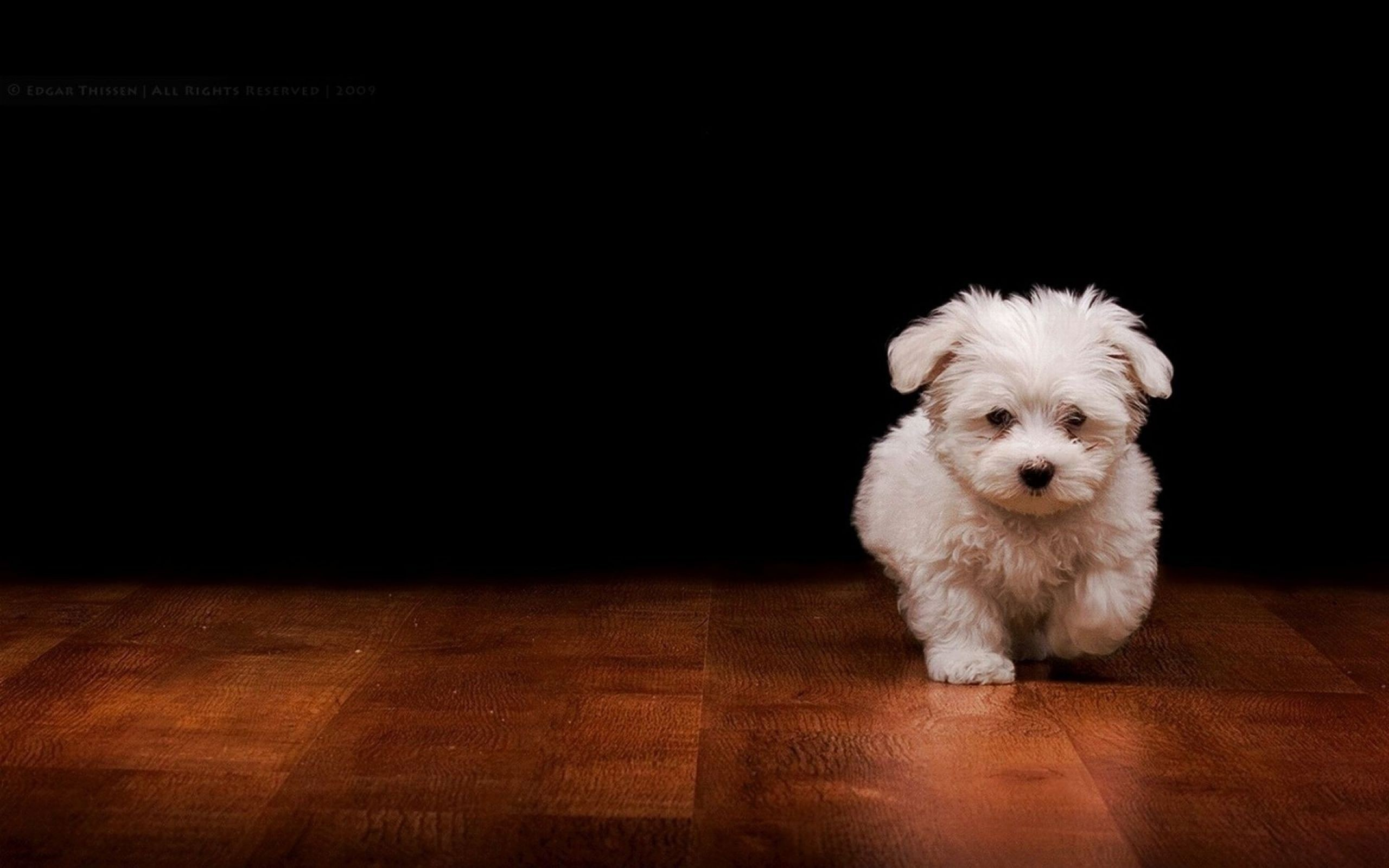 Cute Dogs Puppies Wallpapers HD New