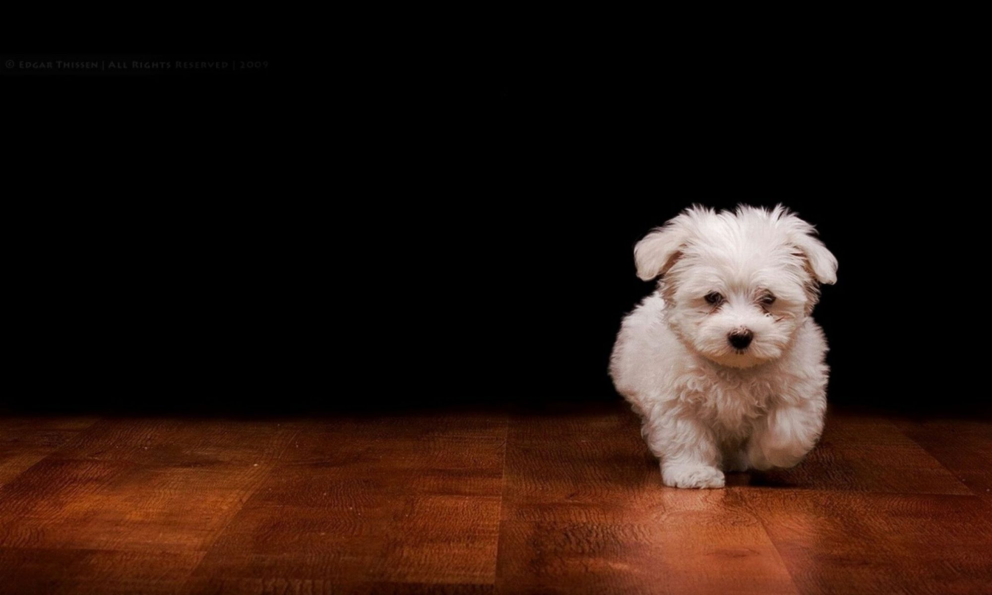 cropped-cute-dog-wallpapers-free-download